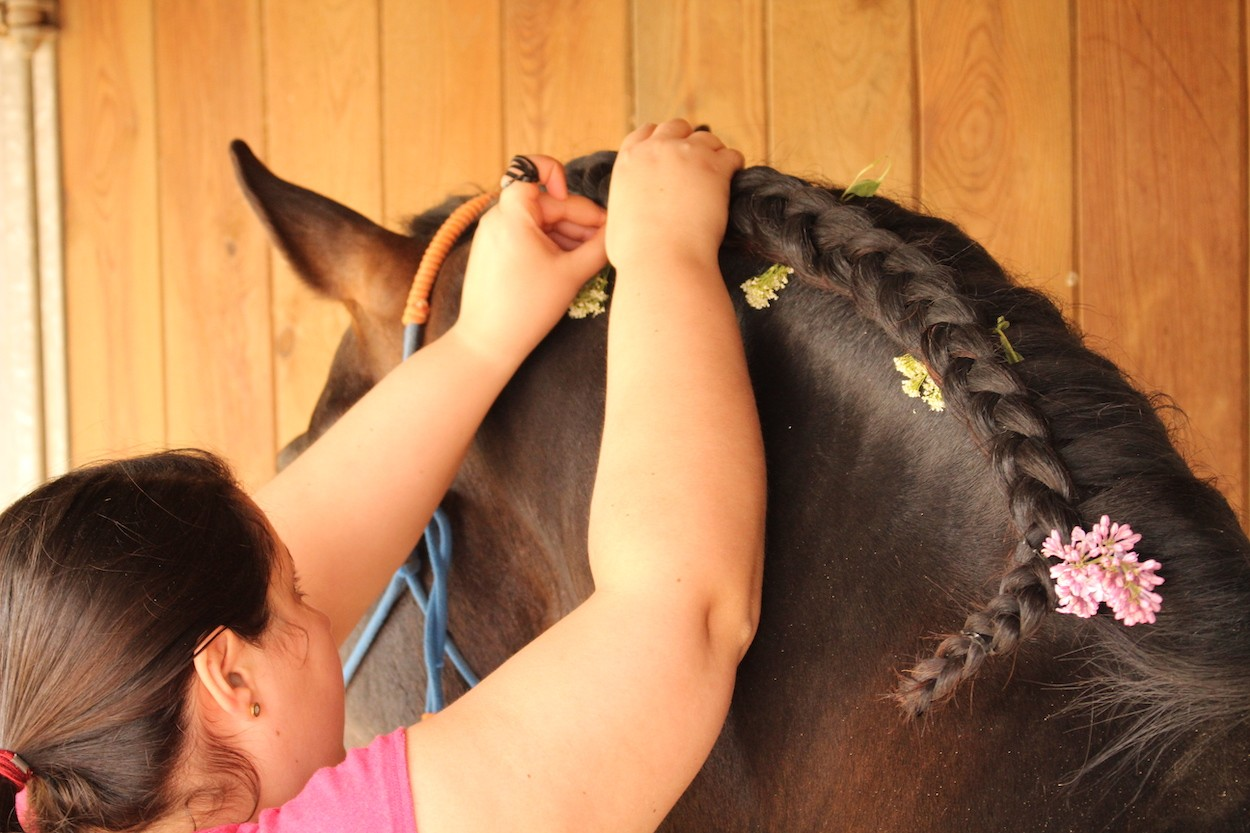 A wedding planner putting flowers in a horse's hair